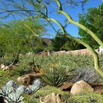Desert Landscaping Elevated to an Artform at ASCAYA in Henderson