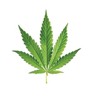 On June 12, 2013, Governor Brian Sandoval signed legislation authorizing the sale of medical marijuana in Nevada.