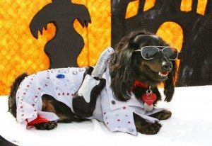 The Family, Fur & Fun Festival and West Charleston Animal Hospital want to remind pet owners about Halloween.