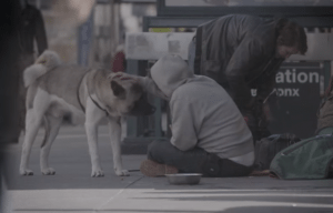 Pets of the Homeless has recently been featured in Elite Daily's documentary video series.