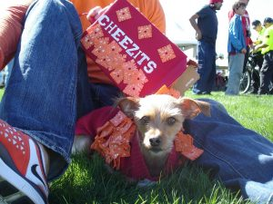 Aloha Animal Hospital and the free Family, Fur & Fun Festival want to remind pet owners to keep four-legged furry family members safe during Halloween.