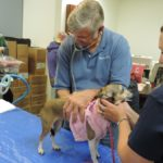 Pets of the Homeless Seeks Veterinarians to Assist with Emergency Care