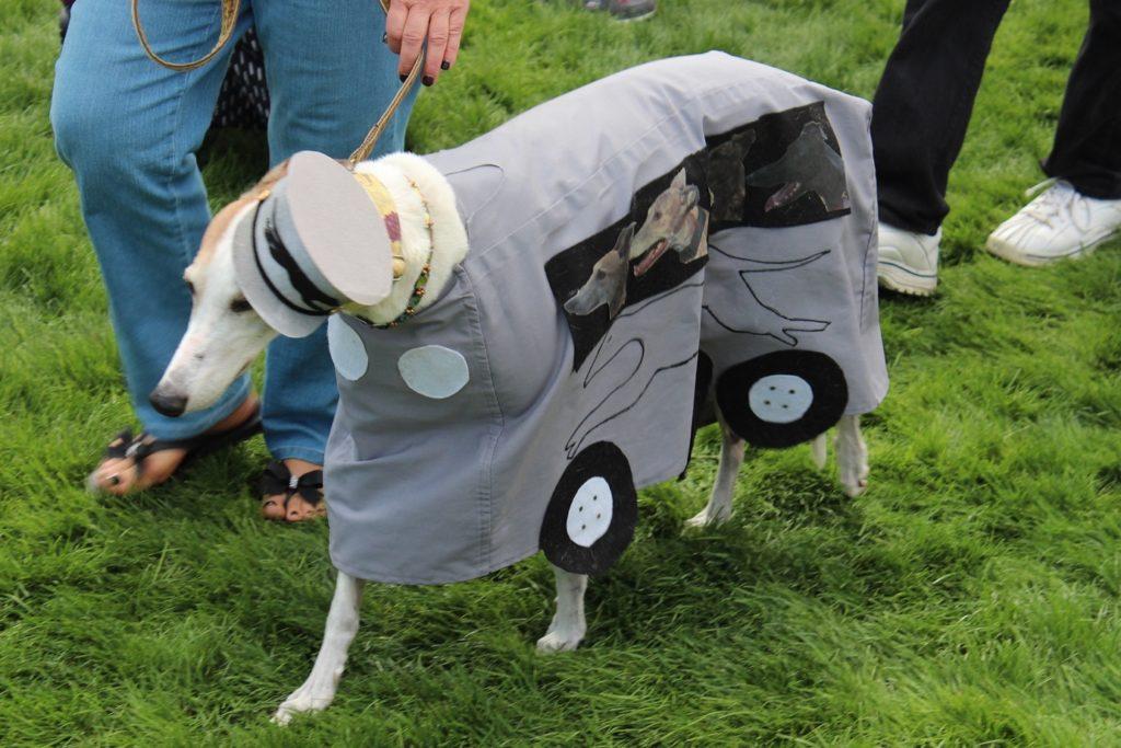 Greyhound bus smlst